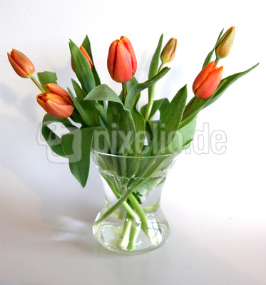 lizenzfreie fotos tulpen in vase. Black Bedroom Furniture Sets. Home Design Ideas