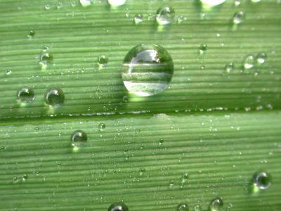 Wassertropfen auf Blatt I