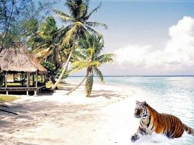 TigerBeach