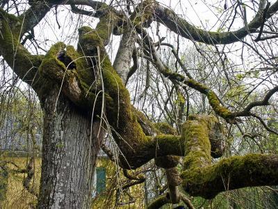 Desorientierter Baum...