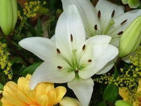 Lilie in weiß