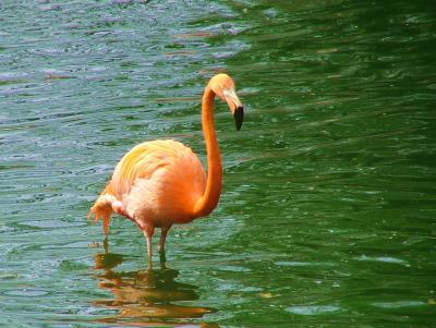 Flamingo solitair