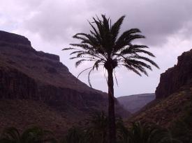 Palme im Palmitos Park