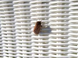 Insekt auf dem Liegestuhl