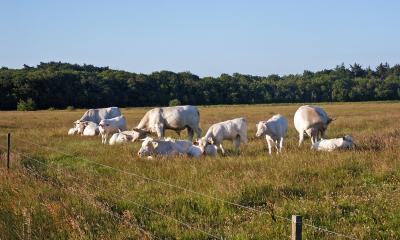 Rinderland (3)