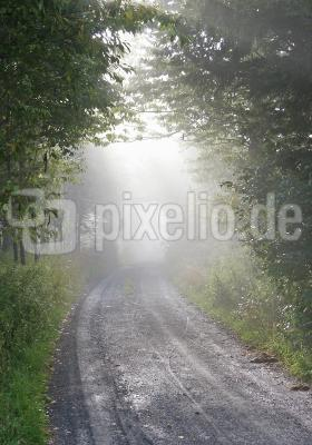 Im Nebelwald 5/9