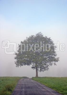 Im Nebelwald 6/9