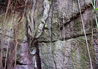 Regenwald (2)
