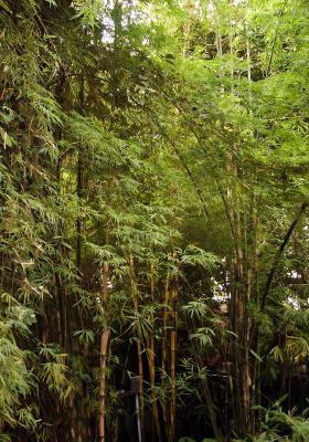 Regenwald (4)