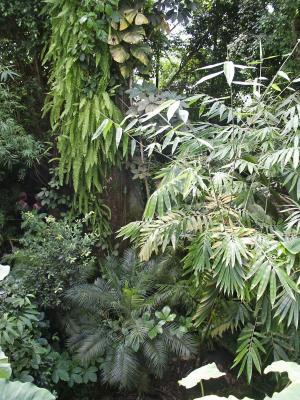 Regenwald (7)