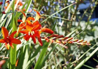 Blüten (3)