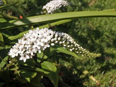 Blüten (4)