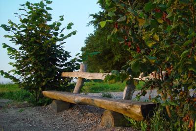Holzbank in der Abendsonne