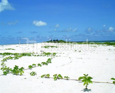 Strand von Barbuda
