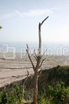 Verbrannter Baum 4