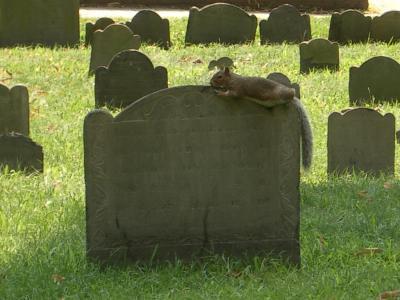 Take a break, take a gravestone