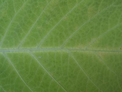 Grüne Blattfasern