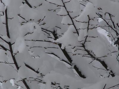 erster Schnee 6