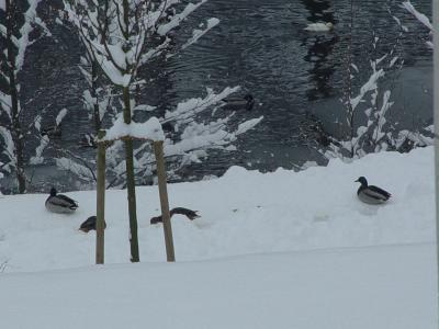 erster Schnee 8