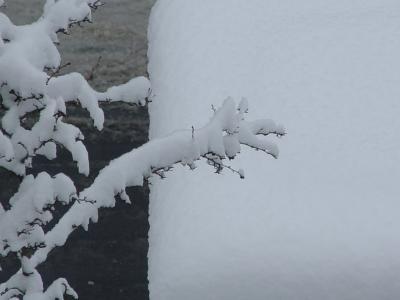 erster Schnee 9