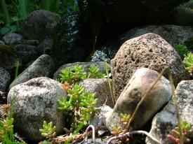 Flora an der Quelle