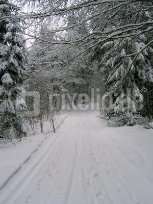 Wanderweg\Rodelbahn bei Oybin