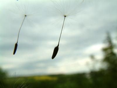 Fallschirme der Natur