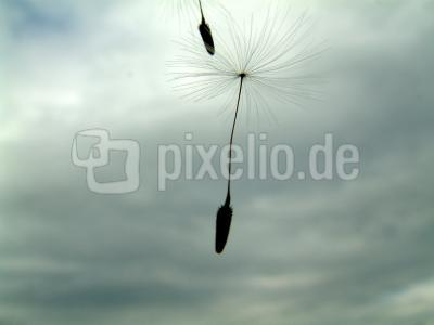 Fallschirme der Natur Teil 2