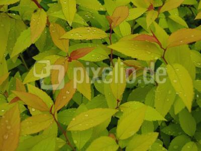 Bunte Blätter nach dem Regenschauer