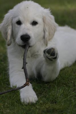 Hund grüßt bei Zahnpflege