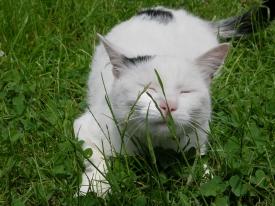 Gras riecht guuuut!