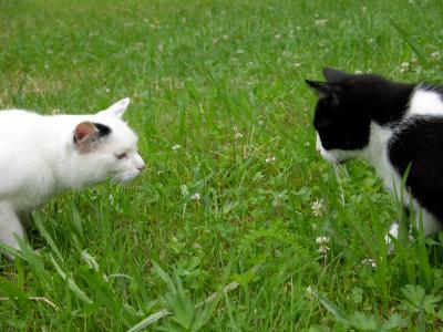 Katzenbegrüßung 1 - Vorsichtige Annäherung