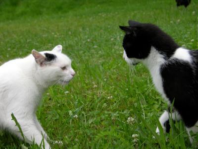 Katzenbegrüßung 2 - Abchecken wie der Andere gelaunt ist -
