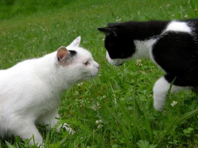 Katzenbegrüßung 3 - Alles in Orndung!
