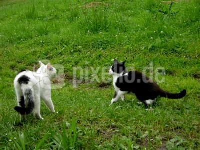 Katzenbegrüßung 4 - Ritual zufriedenstellend verlaufen - jetzt wird gespielt
