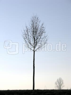 Baum in Winterstimmung