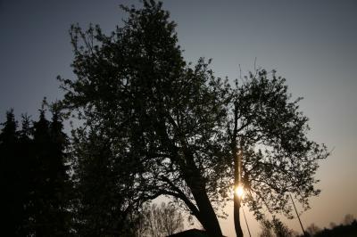 Baum gegen Licht
