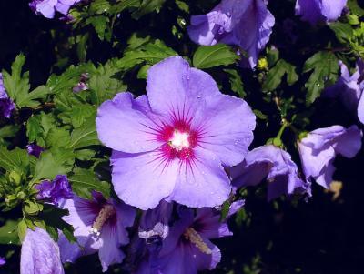 Letzte Blüten im Morgetau