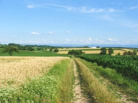 elsässische Landschaft