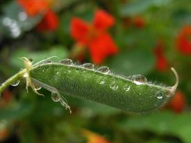 Spiegelung in Regentropfen