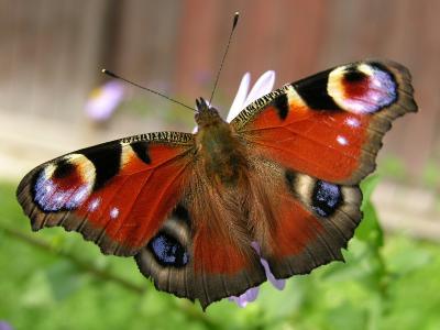 Der Vorher/Nachher-Schmetterling - nachher