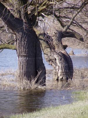 Bäume im Wasser 2