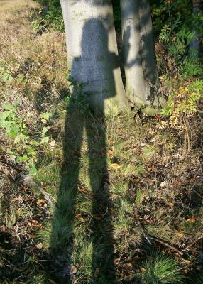 Schatten ... (2)