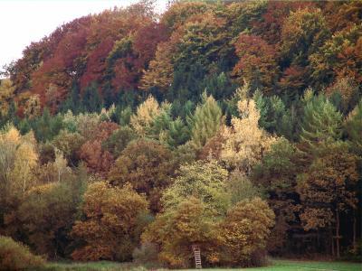 Herbstwald im Taunus 2