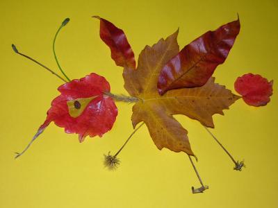 Selten! Der gemeine Herbstblattrüssler
