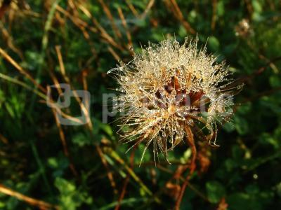 Herbstimpressionen 03