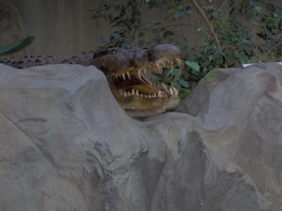 Krokodilschnauze