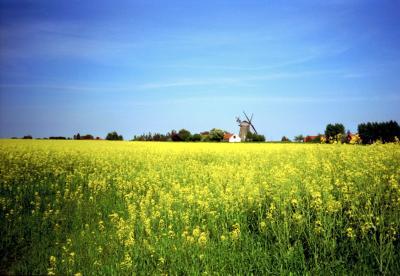 Blau Gelb mit Windmühle
