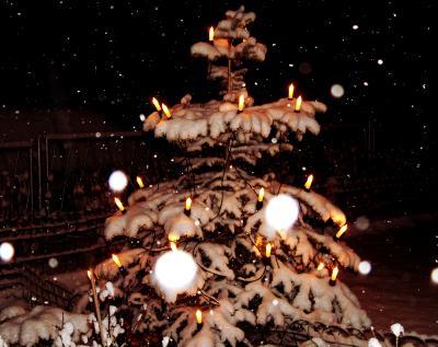 Weihnachtsbaum im Schneefall