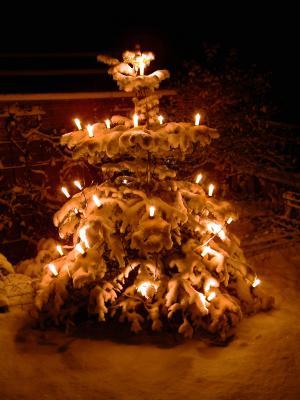 kostenloses foto weihnachtsbaum im schnee. Black Bedroom Furniture Sets. Home Design Ideas